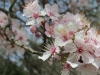 Blume 2_Hacker_Lohner