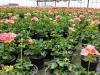 Blumenbeet Kinga Zawislak